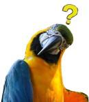 puzzled-parrot-carlos-quiroz