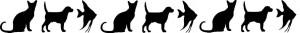 catdogfish
